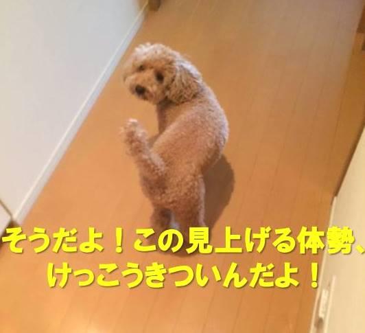 f:id:nanachan59:20171123155652j:plain