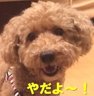 f:id:nanachan59:20171123160532j:plain