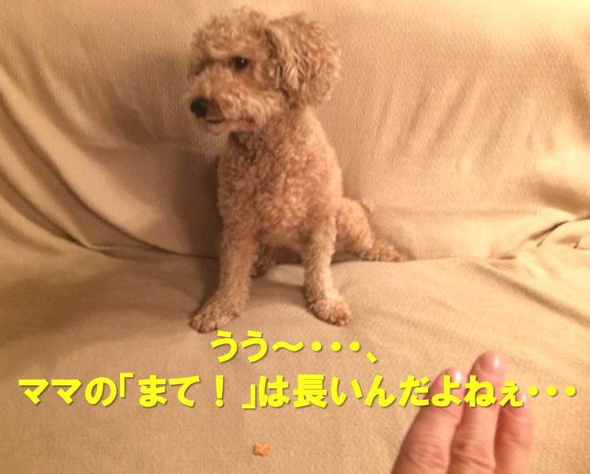 f:id:nanachan59:20171125182830j:plain