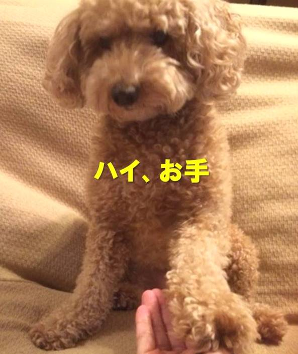 f:id:nanachan59:20171125204851j:plain