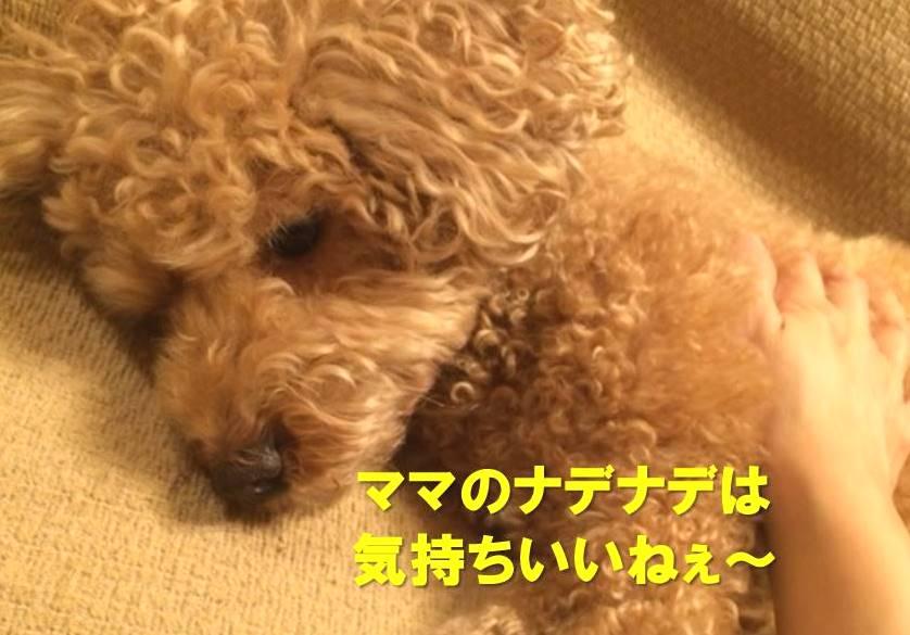 f:id:nanachan59:20171126221618j:plain