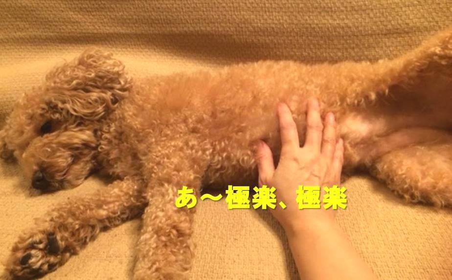 f:id:nanachan59:20171126221918j:plain