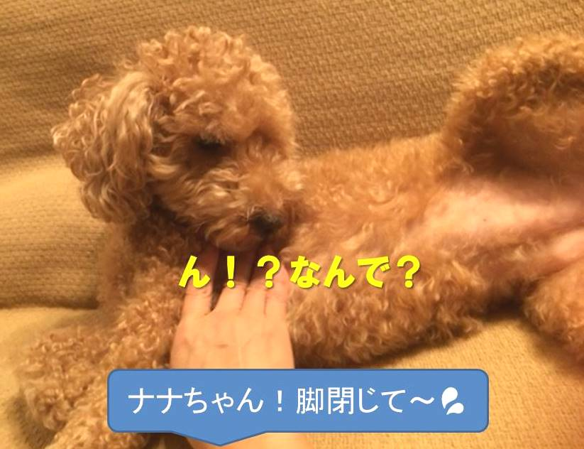f:id:nanachan59:20171126222319j:plain