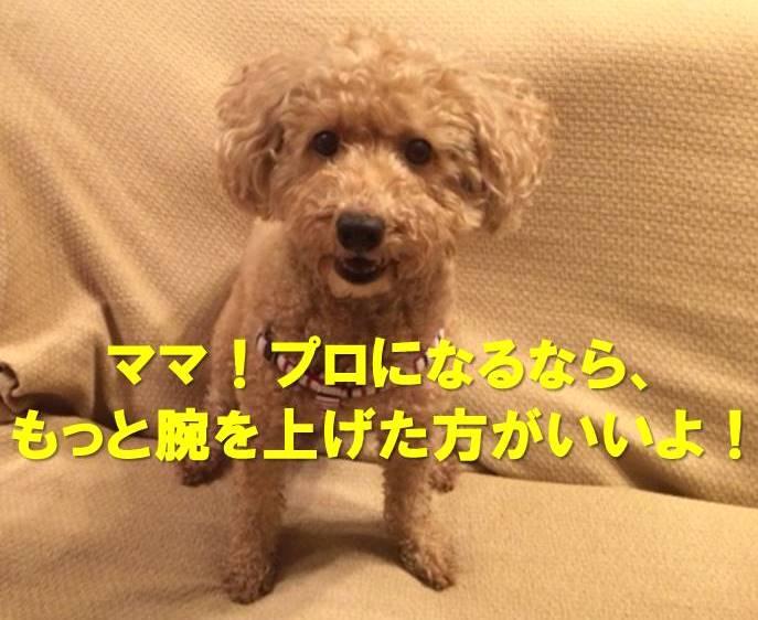 f:id:nanachan59:20171127001126j:plain