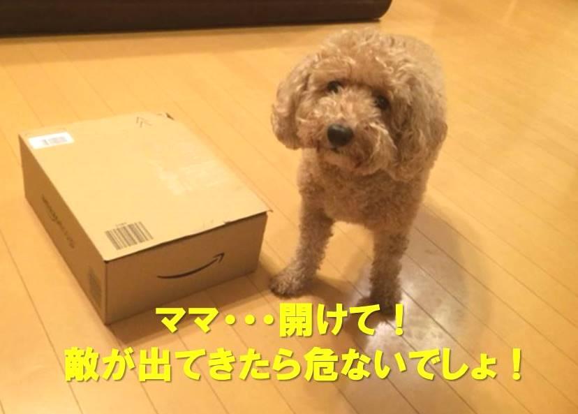f:id:nanachan59:20171128181154j:plain