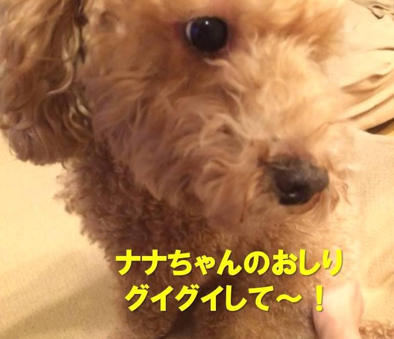 f:id:nanachan59:20171130222238j:plain