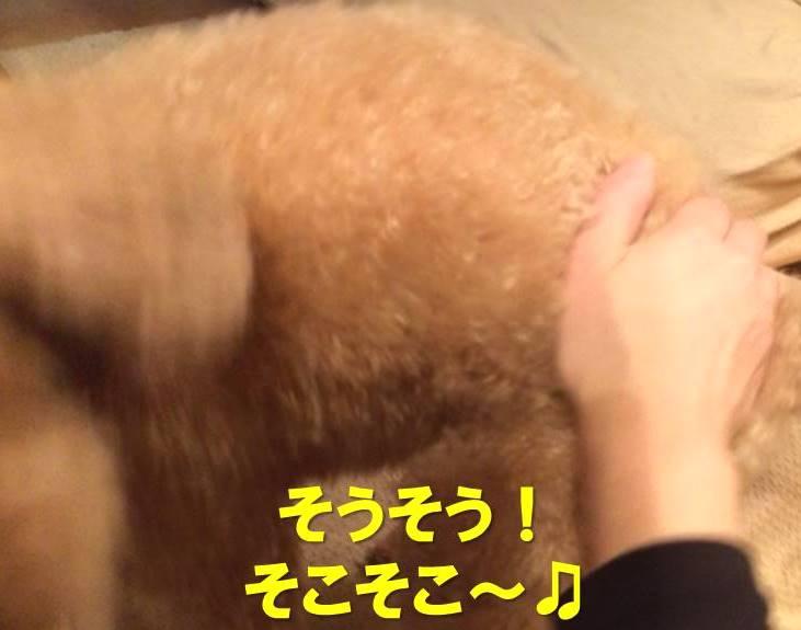 f:id:nanachan59:20171130222551j:plain