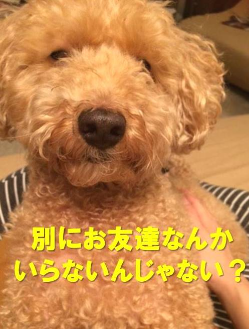 f:id:nanachan59:20171130223248j:plain