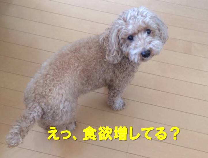 f:id:nanachan59:20171203154232j:plain