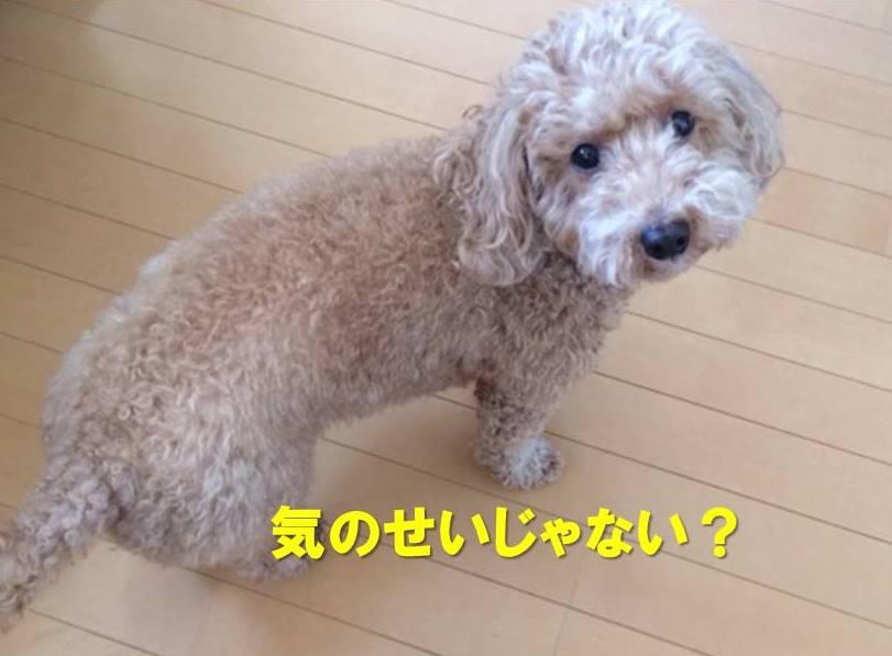 f:id:nanachan59:20171203154541j:plain