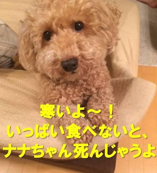 f:id:nanachan59:20171203155400j:plain