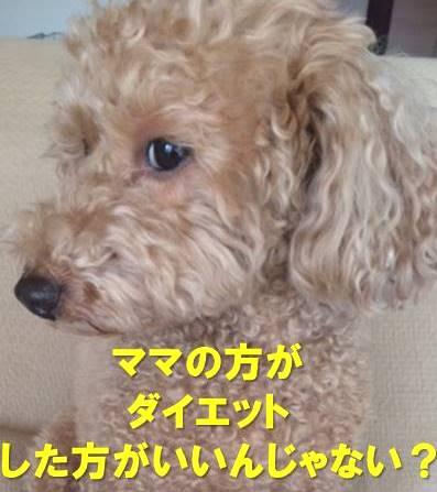 f:id:nanachan59:20171203175138j:plain