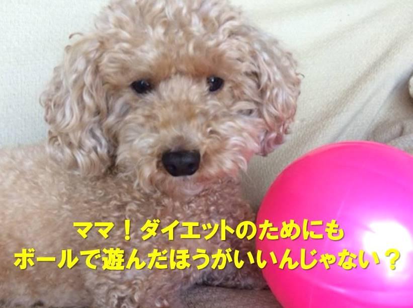 f:id:nanachan59:20171205213240j:plain