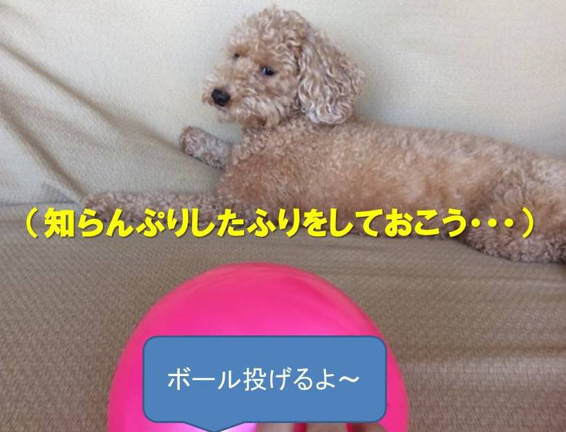 f:id:nanachan59:20171205214036j:plain