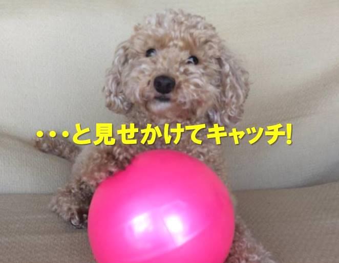 f:id:nanachan59:20171205214620j:plain