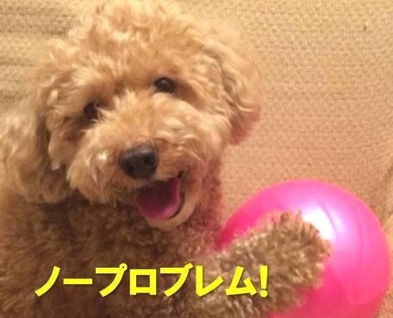 f:id:nanachan59:20171206002353j:plain