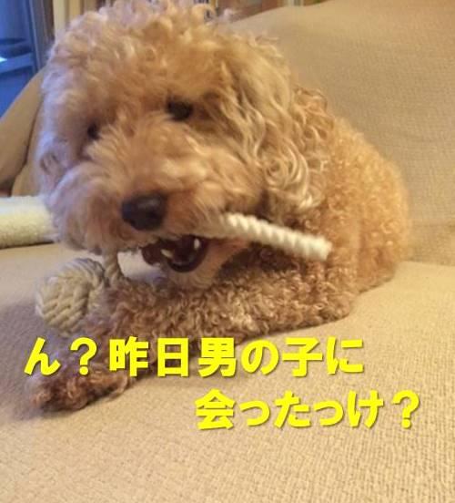 f:id:nanachan59:20171207215225j:plain
