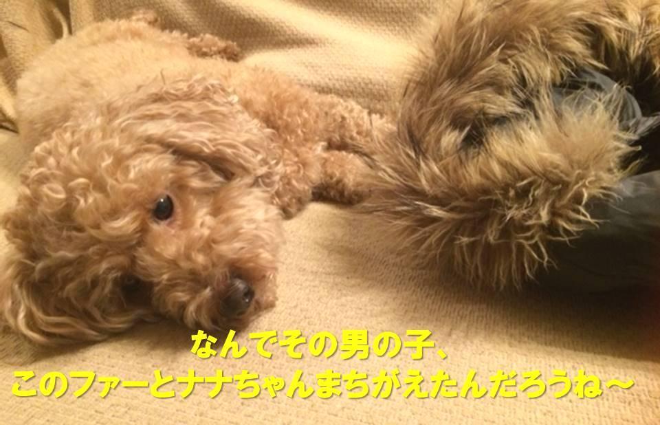 f:id:nanachan59:20171207215720j:plain