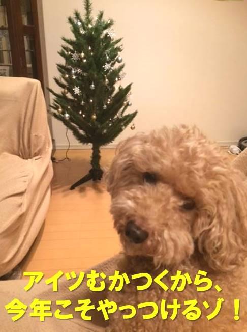 f:id:nanachan59:20171211071635j:plain