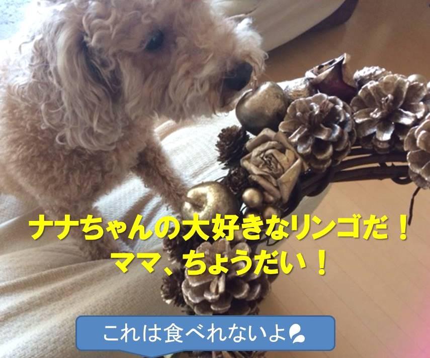 f:id:nanachan59:20171211104616j:plain