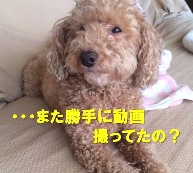 f:id:nanachan59:20171213181023j:plain