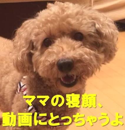 f:id:nanachan59:20171213211028j:plain