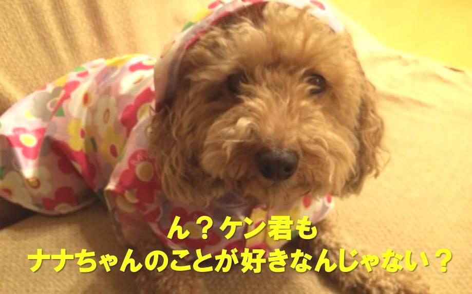 f:id:nanachan59:20171215223741j:plain
