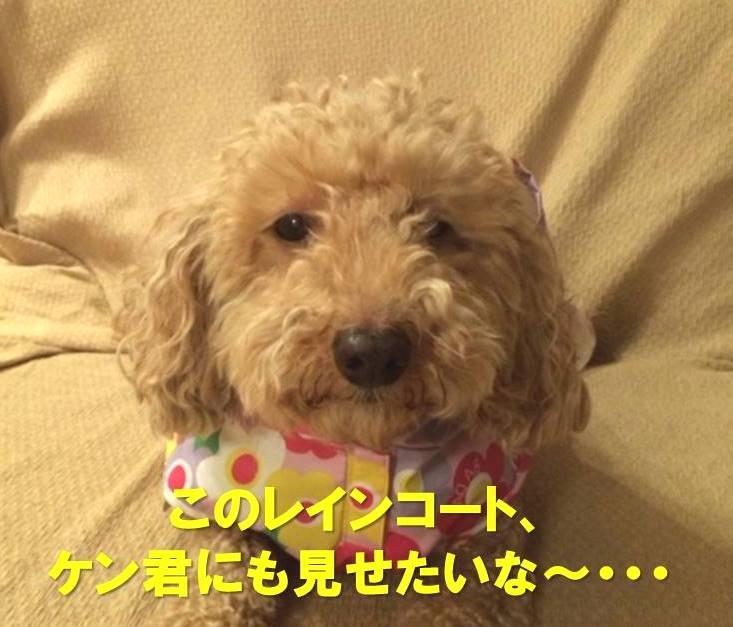 f:id:nanachan59:20171215224544j:plain