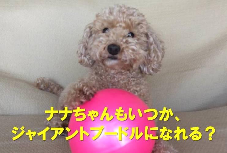 f:id:nanachan59:20171216014904j:plain