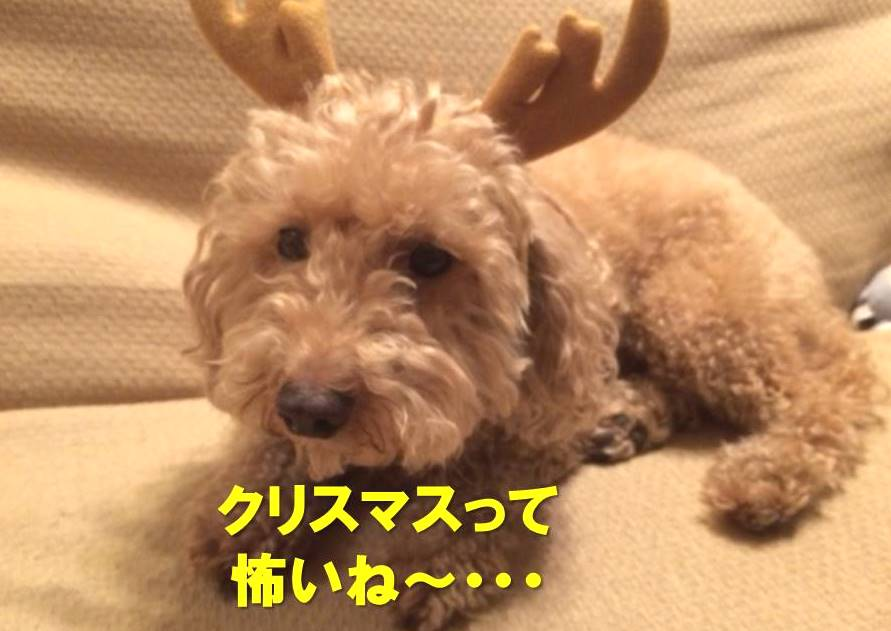 f:id:nanachan59:20171217221031j:plain