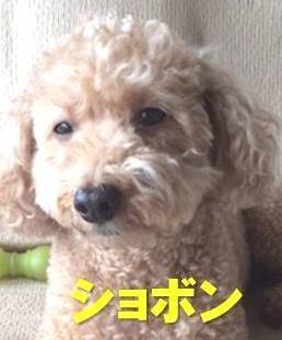 f:id:nanachan59:20171217223406j:plain