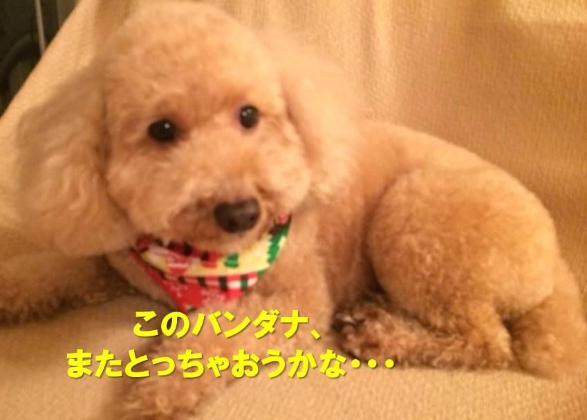 f:id:nanachan59:20171219213608j:plain