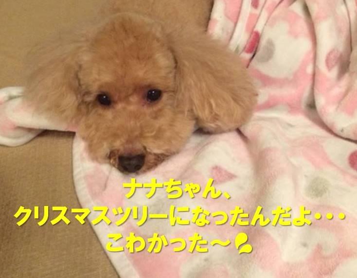 f:id:nanachan59:20171219214340j:plain