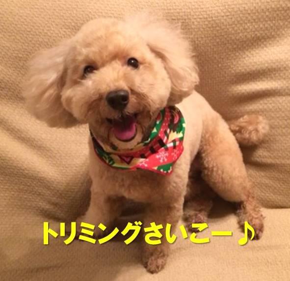f:id:nanachan59:20171219215828j:plain