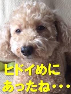 f:id:nanachan59:20171219225106j:plain