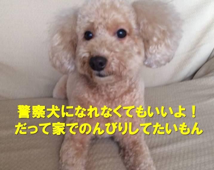 f:id:nanachan59:20171221180509j:plain