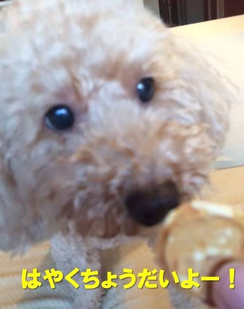 f:id:nanachan59:20171225215658j:plain