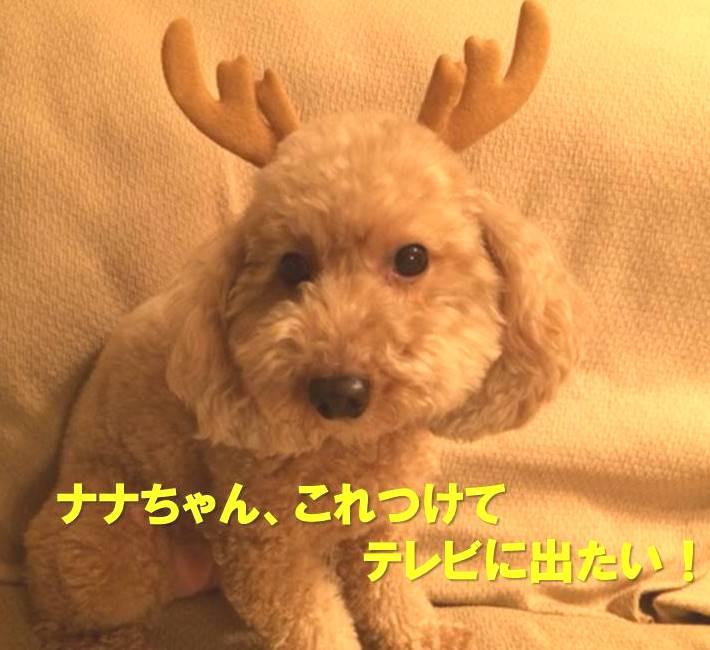 f:id:nanachan59:20171226154949j:plain