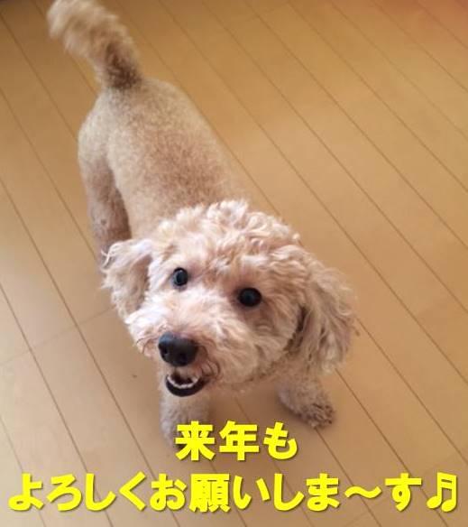 f:id:nanachan59:20171230212622j:plain