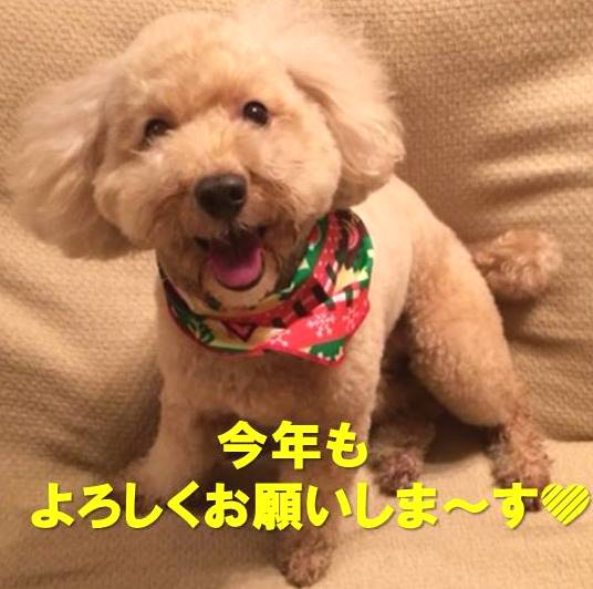 f:id:nanachan59:20180104150024j:plain