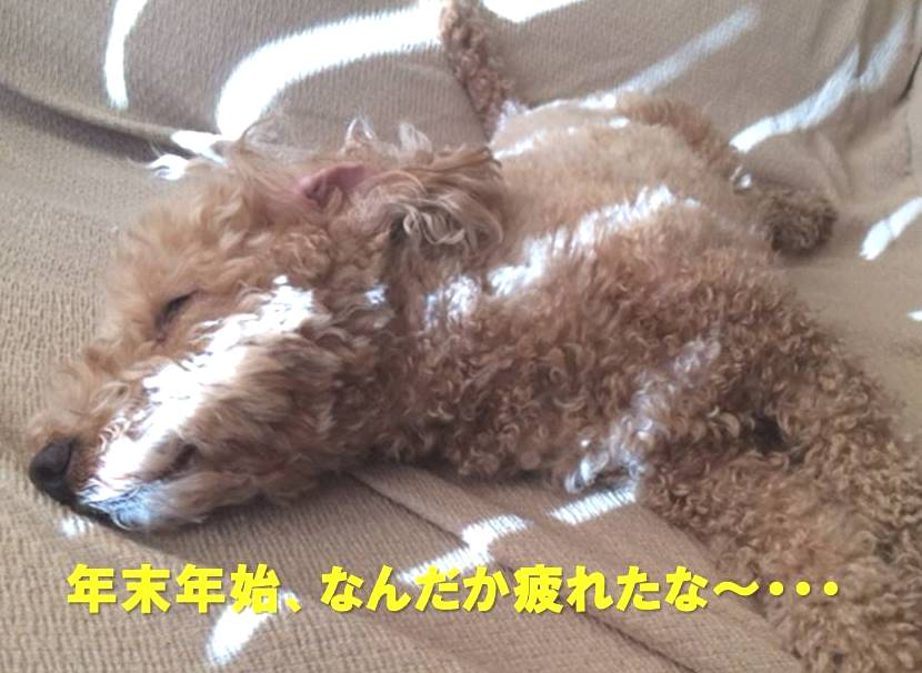 f:id:nanachan59:20180104150553j:plain