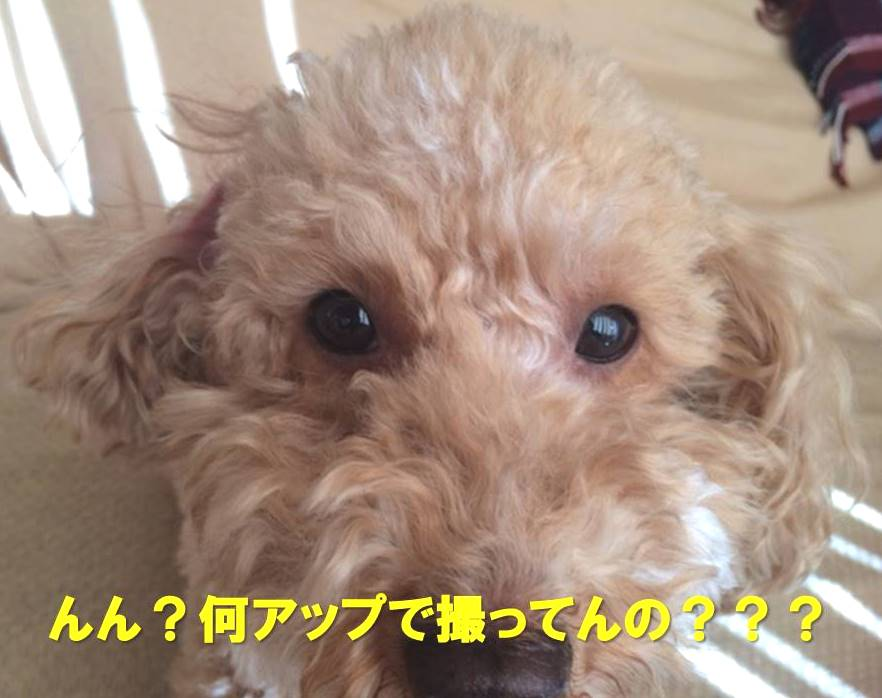 f:id:nanachan59:20180104151554j:plain