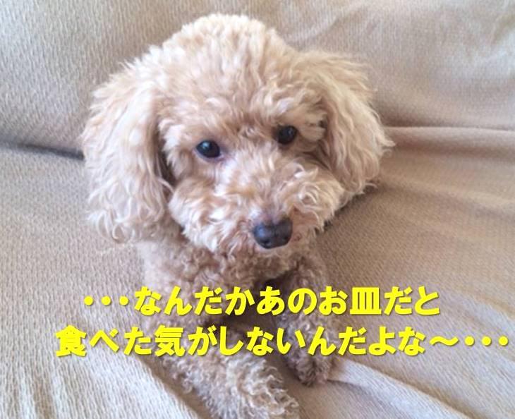 f:id:nanachan59:20180107145315j:plain