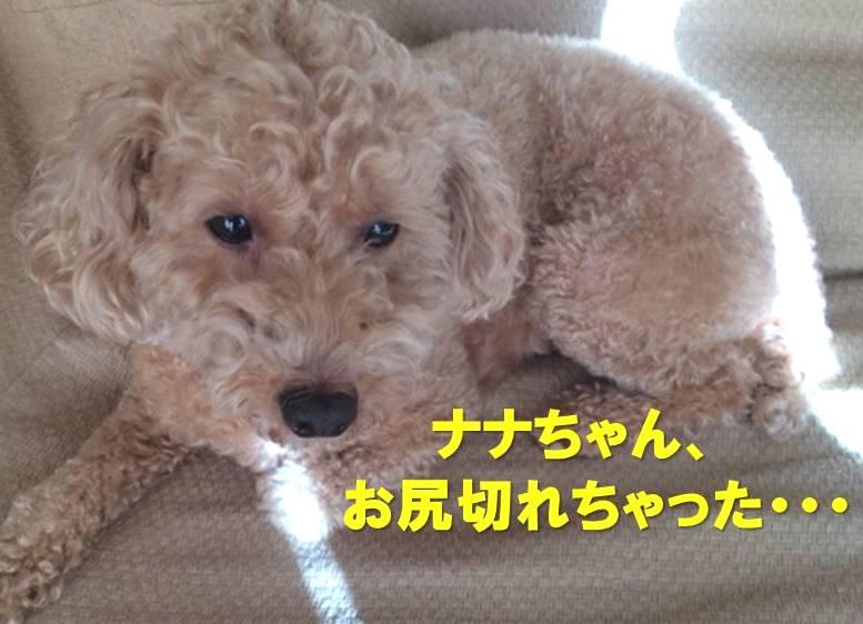 f:id:nanachan59:20180109220330j:plain