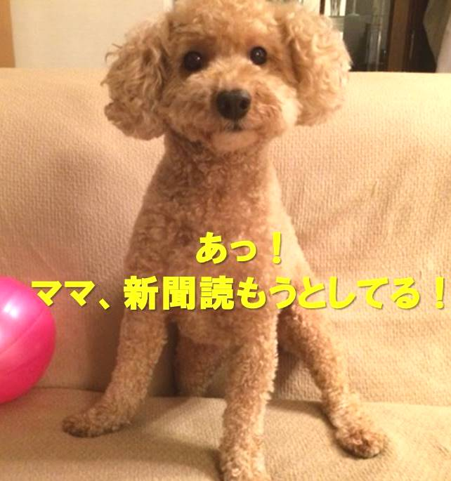 f:id:nanachan59:20180110184116j:plain