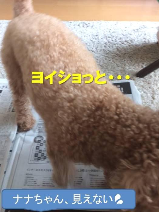 f:id:nanachan59:20180110184739j:plain