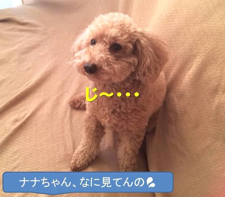 f:id:nanachan59:20180111204805j:plain
