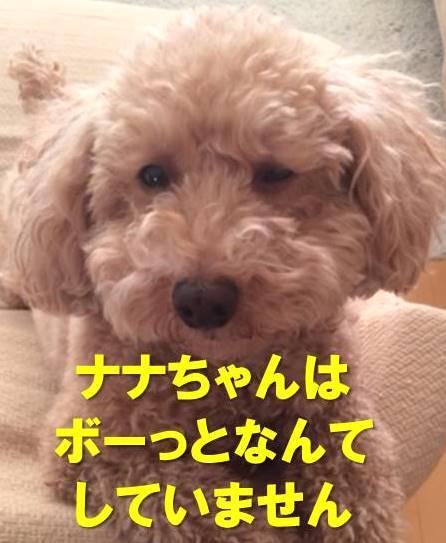 f:id:nanachan59:20180111205620j:plain