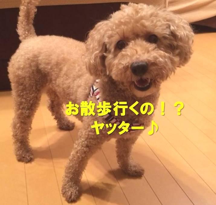 f:id:nanachan59:20180113190226j:plain