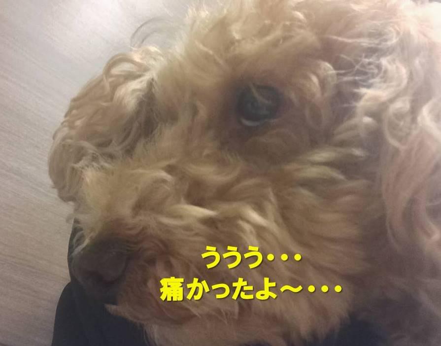 f:id:nanachan59:20180113190904j:plain